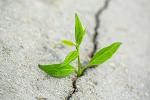 Hope Light at the End of the Tunnel Growth Opportunity Plant Conquering Adversity Motivation